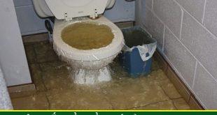 Làm Thế Nào Khi Bồn Cầu Toilet Dội Nước Không Xuống